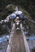 Wół niesie ze sobą ładunek przez drewniany most — Zdjęcie stockowe
