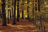 Beautiful Autumn Woodland — Foto Stock