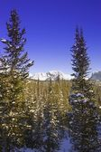 Wintry Mountainous Forest — Stock Photo