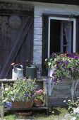 Garden Paraphernalia And Flowering Plants — Stock Photo