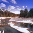 Wintry River And Coniferous Forest — Stock Photo