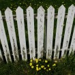 A White Picket Fence — Stock Photo