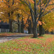 Stock Photo: Autumn Trees Surrounding Driveway