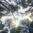 Stock Photo: Sun Shining Through Tree Tops