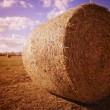 Harvested Hay — Stock Photo #31621137