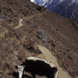 Cow Grazing In Mountainous Landscape — Stock Photo