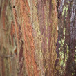 Tree Bark — Stock Photo #31622653