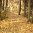 Foto Stock: Autumn Woodland Path