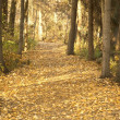 ストック写真: Autumn Woodland Path