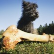 Dog With Bone — Stock Photo