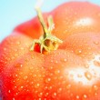 Ripe Tomato — Stock Photo #31622903