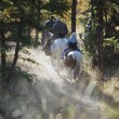 Stock Photo: Trail Riding