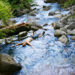 Laying In Stream — Stock Photo #31623365