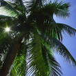 Palm Tree — Stock Photo #31623733