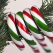 Stock Photo: Candy Canes Hanging From Tree