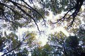 Sun Shining Through Tree Tops — Stock Photo
