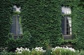 Climbing Plant On The Side Of A House — Stock Photo