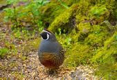 Bird In Forest — Stock Photo