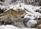 Wolf Crossing River — Photo