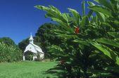 A White Church In A Rural Setting — Stock Photo