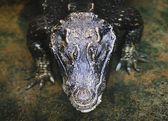 Large Reptile — Stockfoto