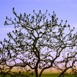 Stock Photo: Silhouette Of Tree