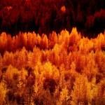秋の木々 — ストック写真