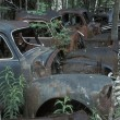 Foto Stock: Old Vehicles In Forest