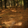 Pine Needles On Forest Floor — ストック写真 #31679405