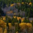 Stock Photo: Hillside Of Autumn Coloured Trees