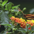 Butterfly — Stock Photo #31679975