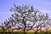 Silhouette Of Tree — Stock Photo