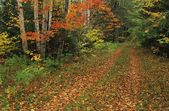 Autumn Country Road — Stock Photo
