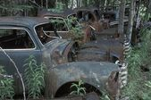 Old Vehicles In A Forest — Stock Photo