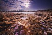 Campo cubierto de nieve de la hierba — Foto de Stock