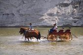 Cowboys And Buggy Crossing A River — Stockfoto