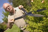 Hedges Being Trimmed — Stock Photo
