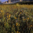 Wildflowers At Two Dog Flats, Glacier National Park — Stock Photo #31682773