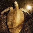 A Sea Turtle — Stock Photo