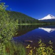 Mount Hood And Reflection In Trillium Lake, Spring. — Stock Photo #31680245
