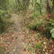 Stock Photo: Trail Covered In Leaves
