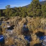 High Desert Landscape In Winter, Sangre De Christo Mountains — Stock Photo