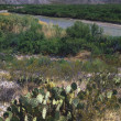 Beavertail Cacti Near Riverbank — Stock Photo #31680889