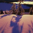 Stock Photo: Pink And Purple Sunrise Shadows Of Snow Covered Trees, Cascades