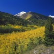 Stock Photo: Aspen Trees In Autumn Color, Rocky Mountains, SIsabel National Forest