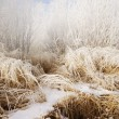 Stock Photo: Frosty Grass