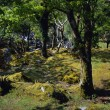 Stock Photo: Forest Trees And Mosses, Killarney National Park