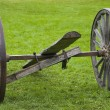 Wagon Wheels — Stockfoto #31681551