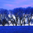 Stock Photo: Frosty Trees