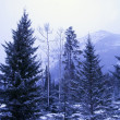 Winter Scene — Stock Photo #31682499